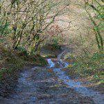 Access track to Kilkhampton Common