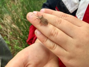 Westland Countryside Stewards Nature Trail Bug Hunt Dock Beetle close up on a child's hand
